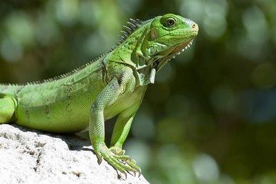 20100125215534-reptile-supplies.jpg