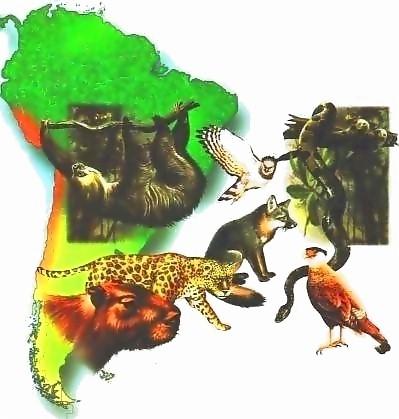 20101128225611-animales-extincion.jpg