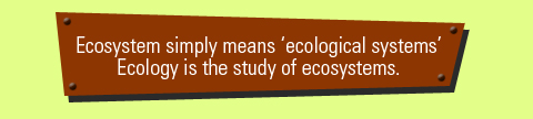 meaning of ecosystems